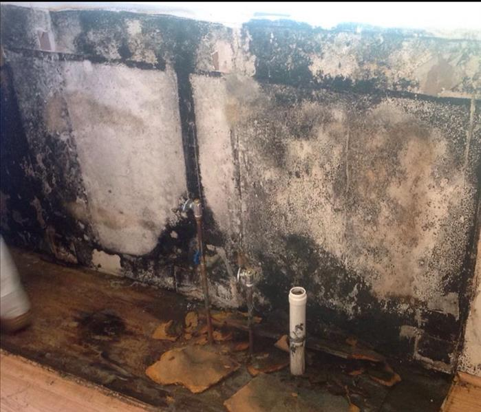 Elkton Water and Mold Damage