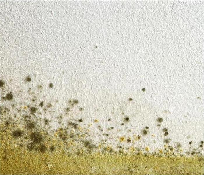 Mold Remediation How To Prevent Mold During the Rainy Season